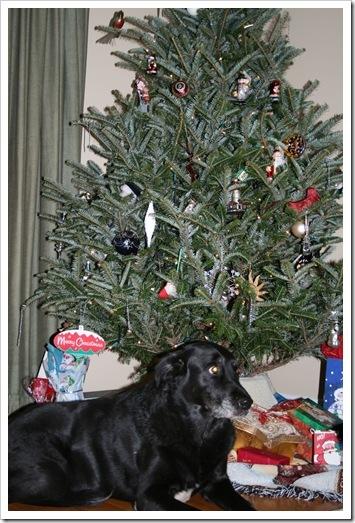 Christmas2007--RoxyAndTree_thumb3